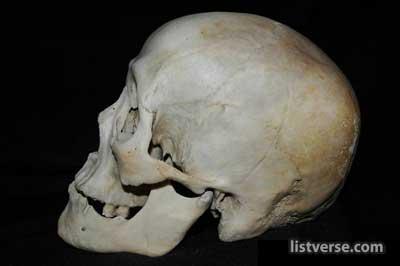 Skull969B Large